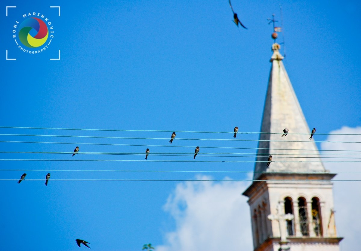 Birds at church